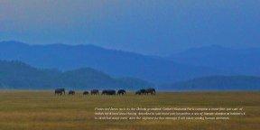 Sanctuary Asia-June 2014