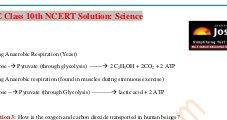 CBSE-CBSE Class 10 NCERT Solution Science Life Processes