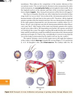 CBSE-Class 12 NCERT Biology Chapter-3: Human Reproduction